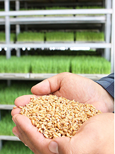 "Koreans Choose Rice for Vibrant Energy! CJ Freshway and Local Farms Protect it with ""Contract Farming""!"